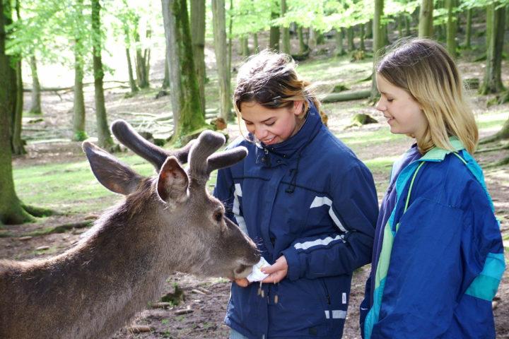 Bergwildpark Meißner